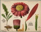 Plant en bloeiwijze Compositae